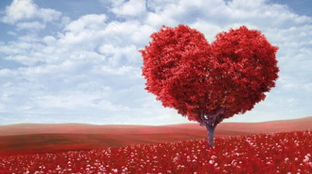 St Valentin arbre coeur sur fond de ciel bleu
