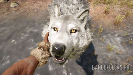 Far Cry Primal Takkar caresse un loup blanc