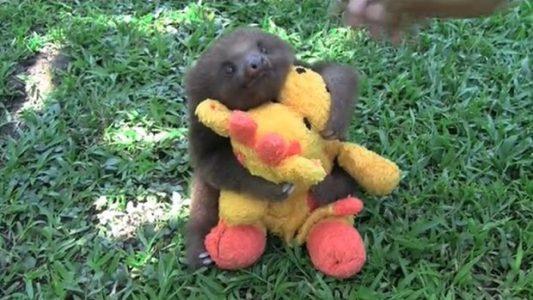 Sloth plush Band of Geeks