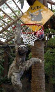 Sloth basket ball Band of Geeks