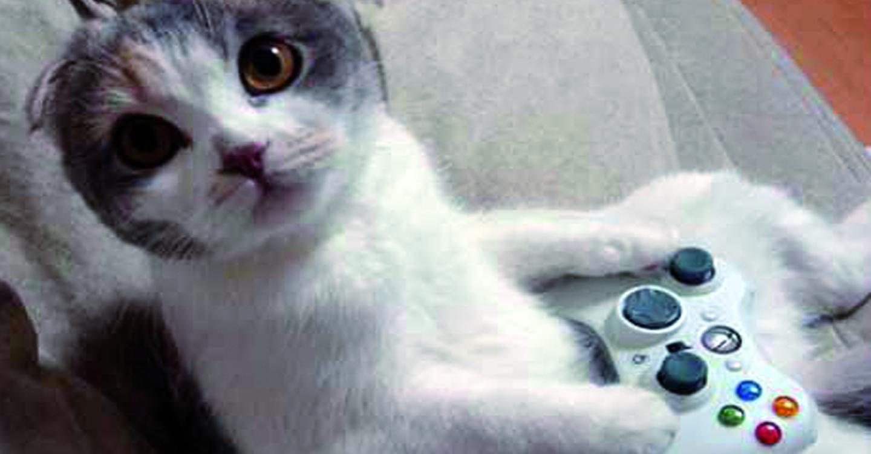chat qui joue